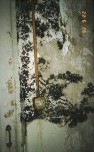 Mould growth indicative of condensation